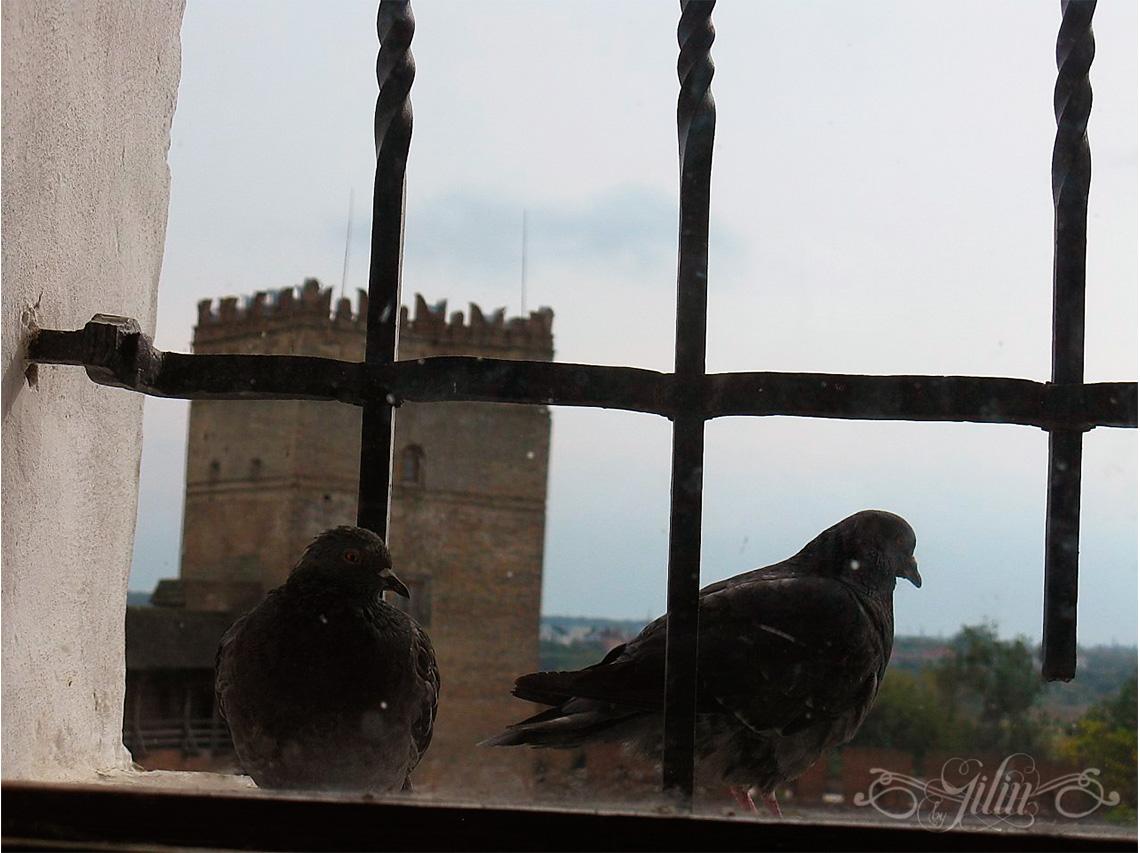 Замок Любарта9