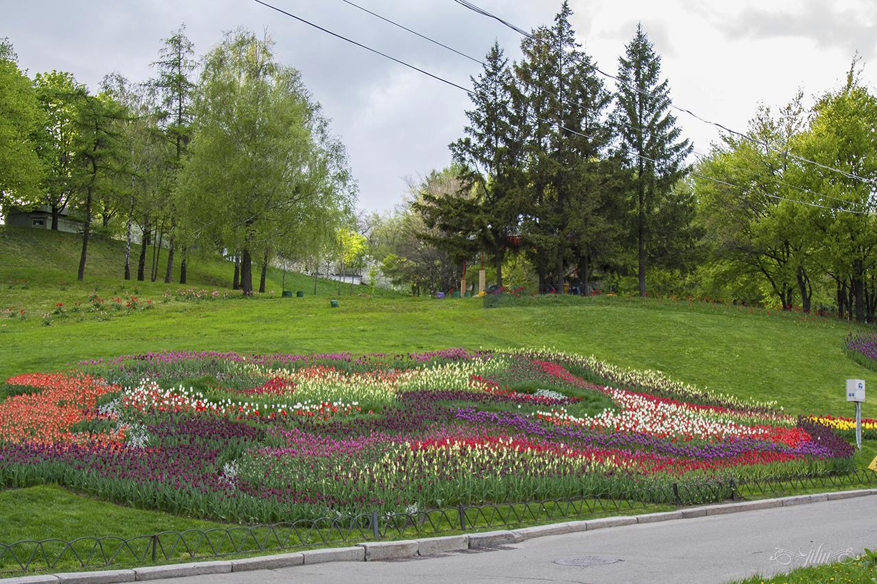 Виставка_тюльпанів6